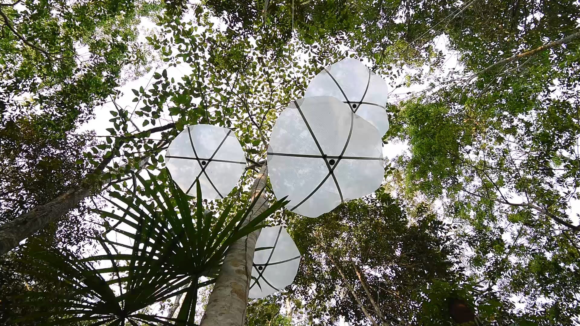 Capturing Canopy - Rain Powered Generator and Collector for the Amazon