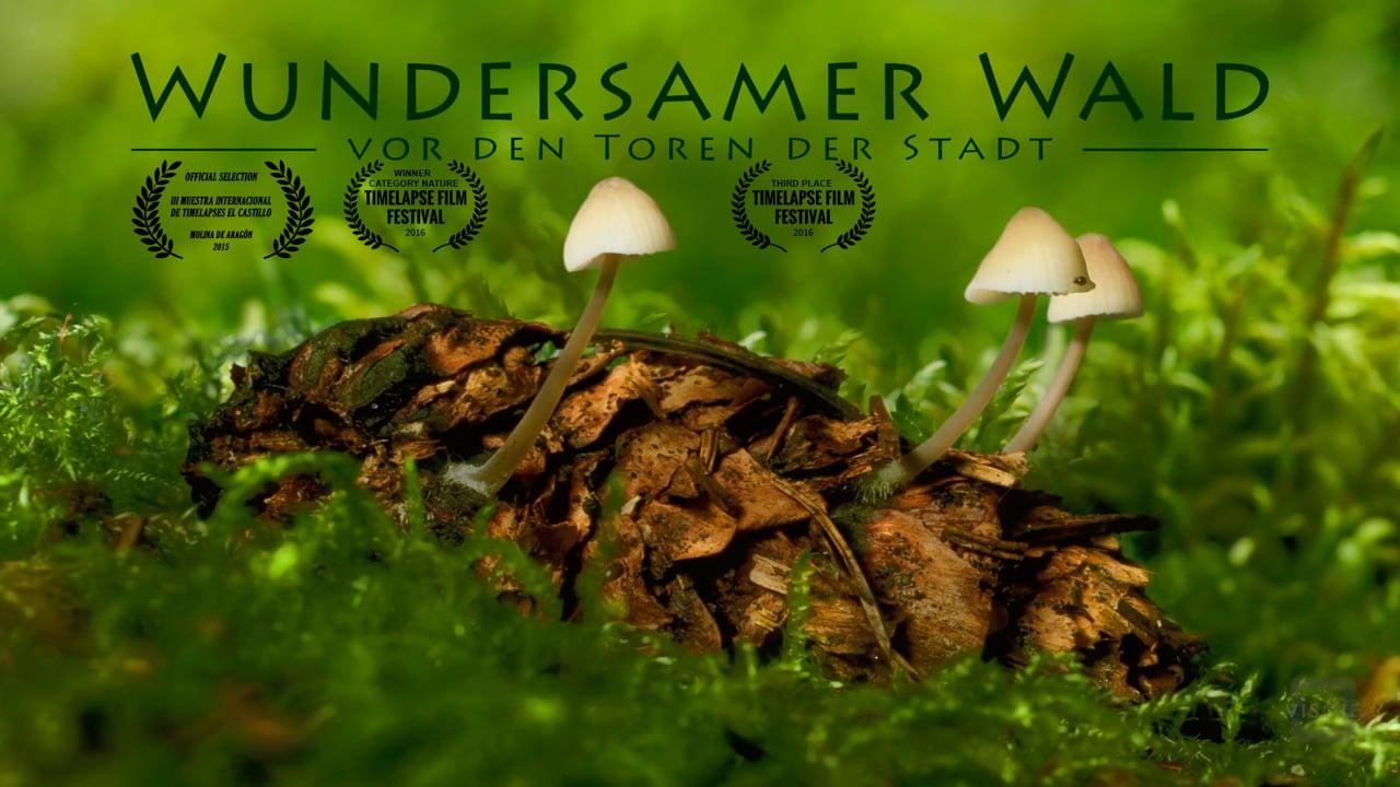 Miraculous Forest - just outside the city || Wundersamer Wald - vor den Toren der Stadt