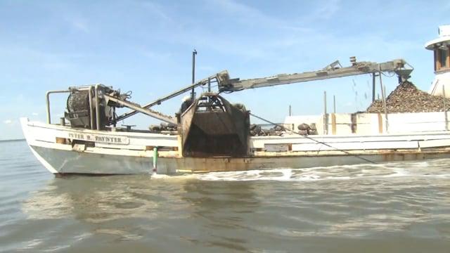 Oyster Restoration Program  New Jersey  / Delaware Bay