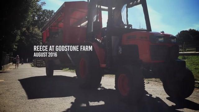 Reece at Godstone Farm