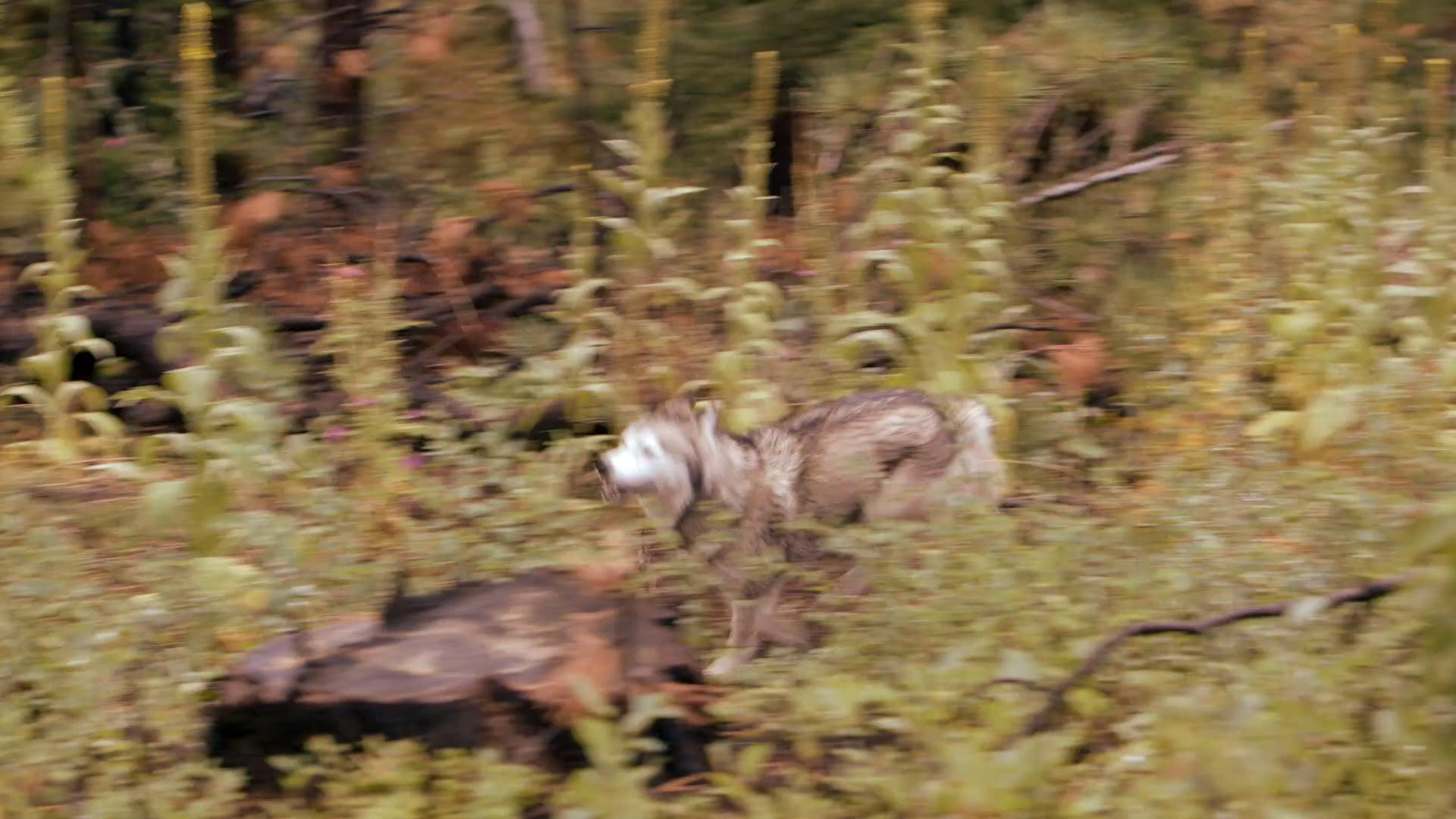 Timber The Treasure Dog Trailer