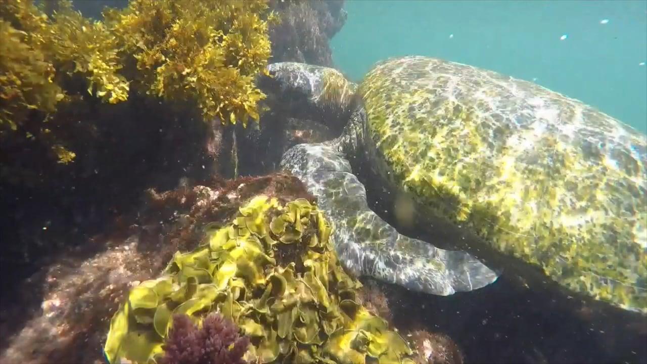 Ecuador, Galapagos Under Water
