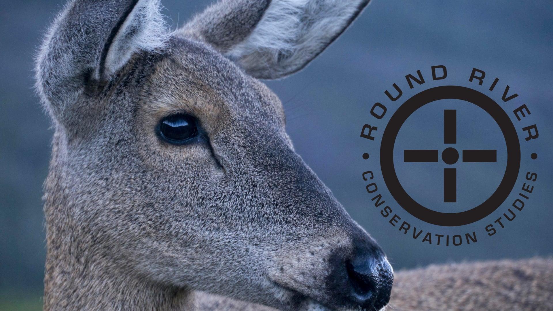 Huemul Deer - Symbol of Chile