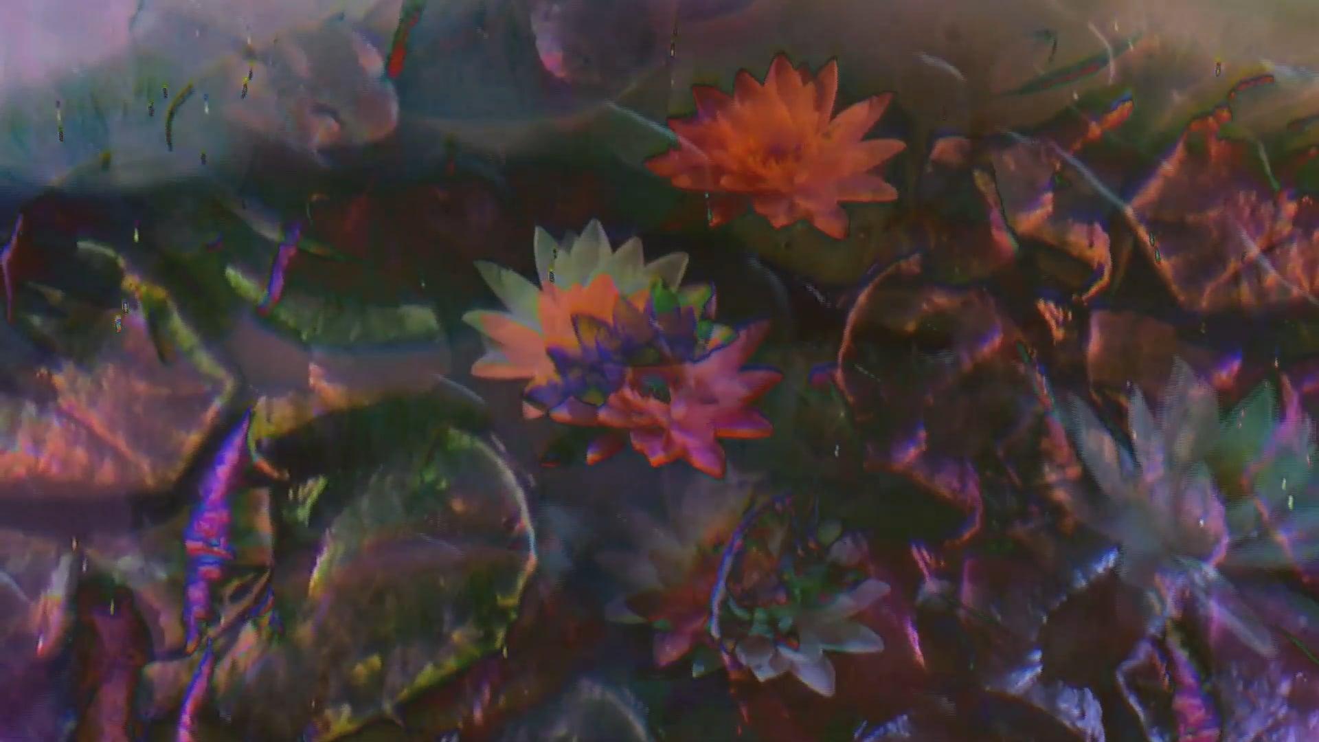 Lily Pad Daydream
