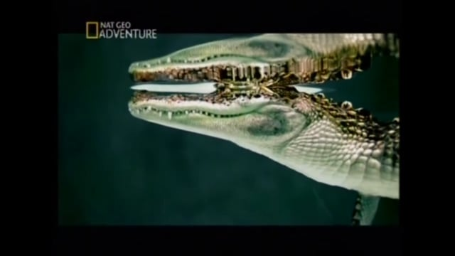 National Geographic high speed promos