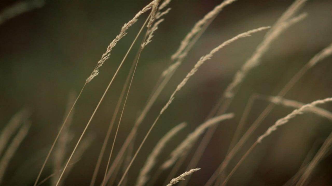 Kahden polven treffit - Trailer (Short)
