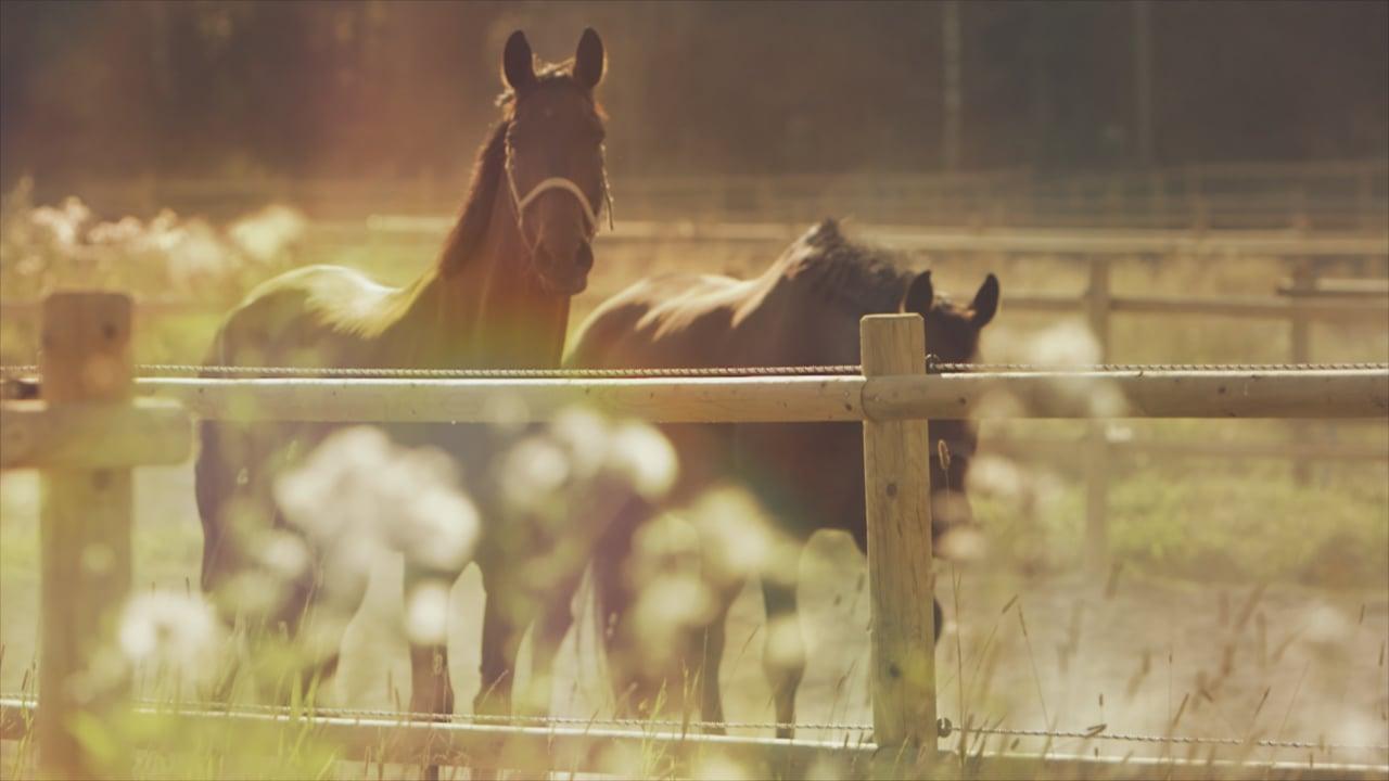 Ystäväni Hevonen trailer