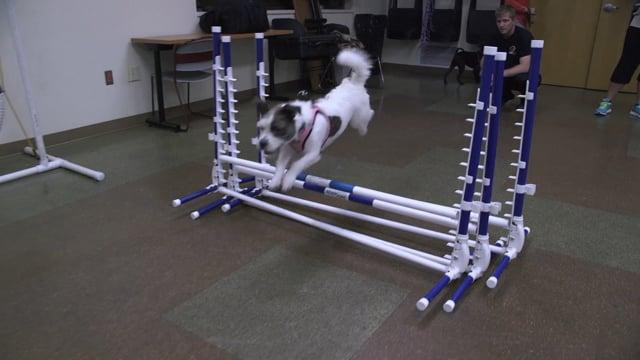 Humane Society of Huron Valley Agility Training