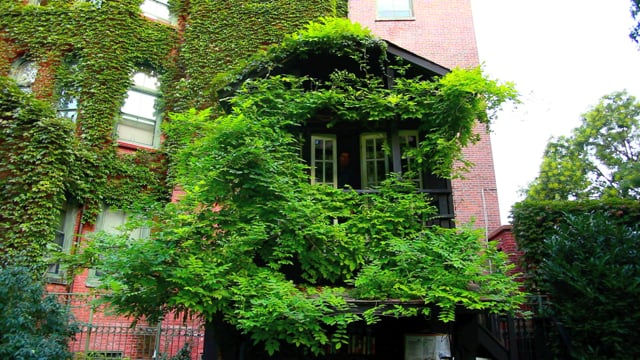Tom Shaner: My House is Green