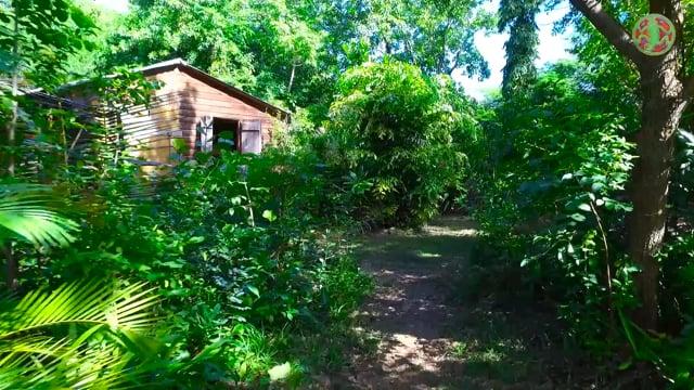 Le bungalow sous les oliviers