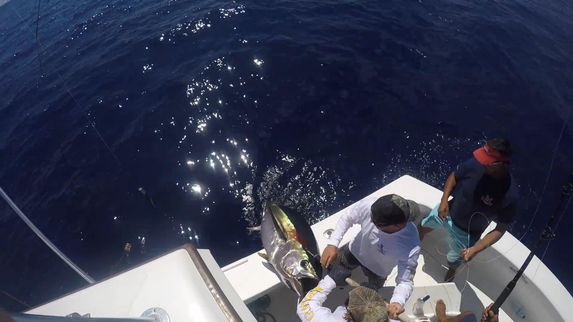 Madeira blue marlin movie