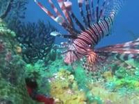 Saba scuba trip 2013