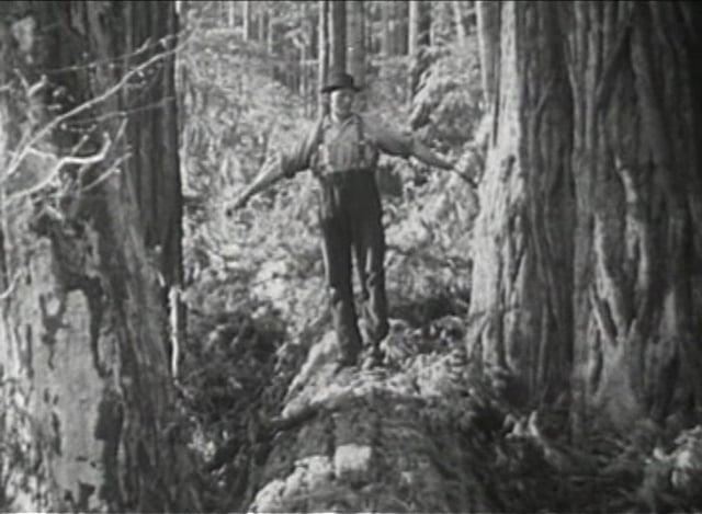 2.44 Redwood