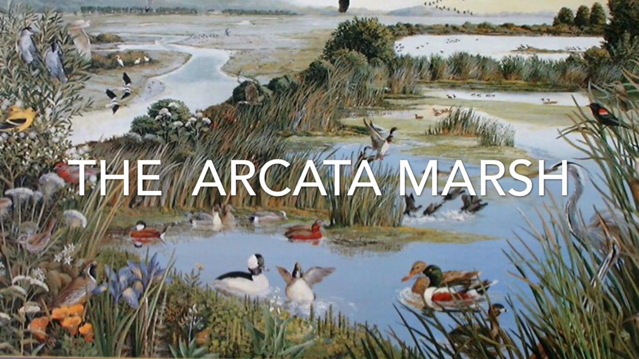 Arcata Marsh Produced By Geneva