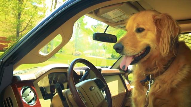 Buck The Wonder Dog's Trailering Tips