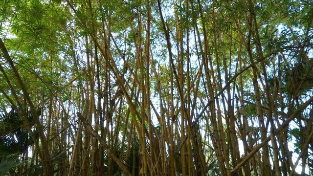 Smith's Tropical Garden | Insta Clip 2