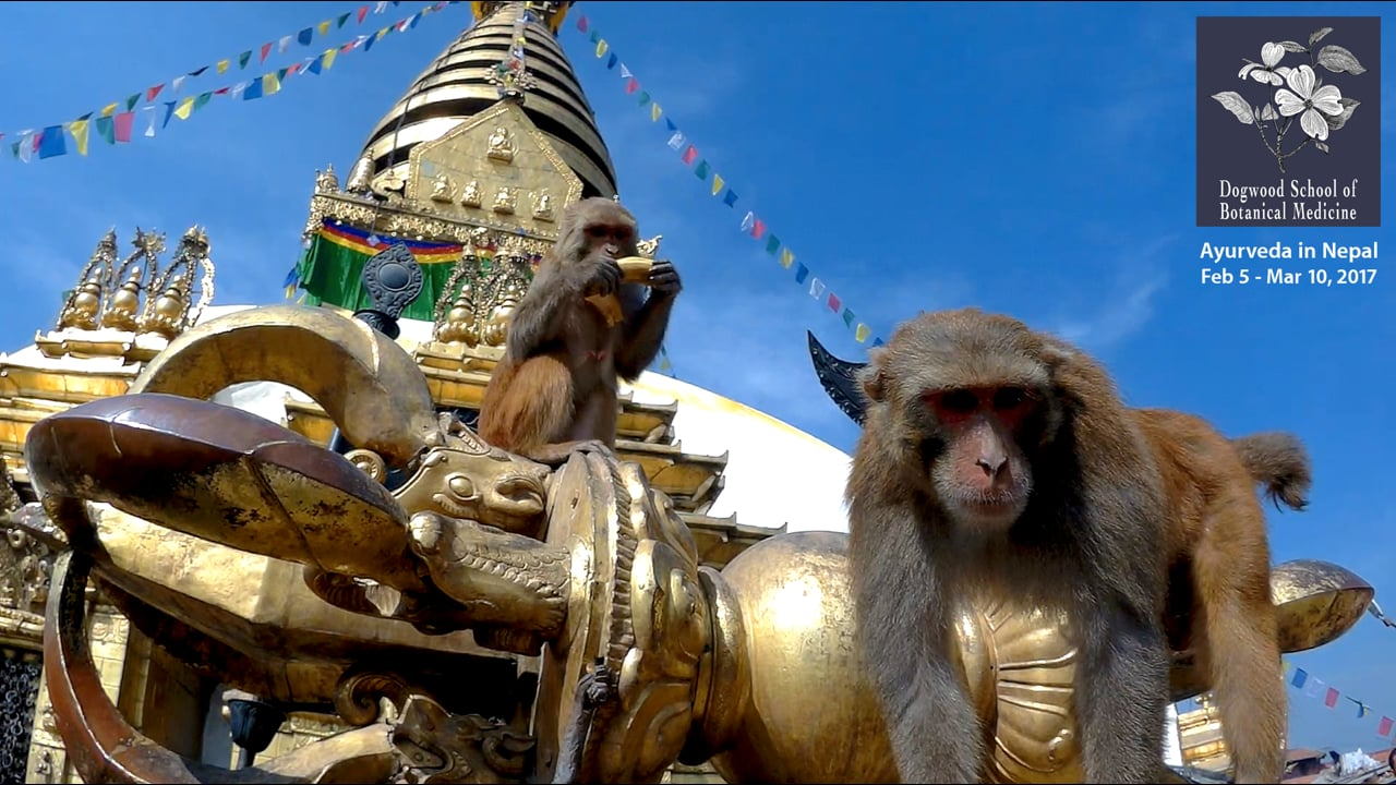 Ayurveda in Nepal Program: Day Three Highlights
