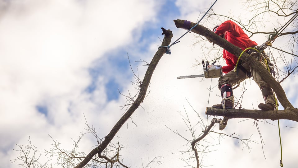 Blazer Tree Services - Commercial