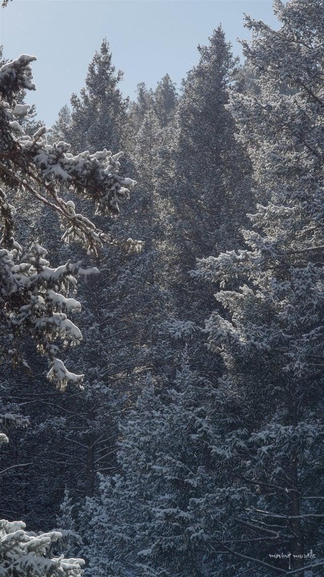 Release 4 - Stir Channel V - Alpine Allure