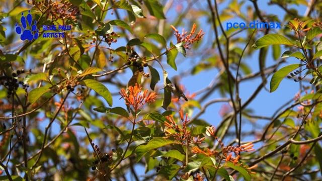 Bee Hummingbird - the World's Smallest Bird