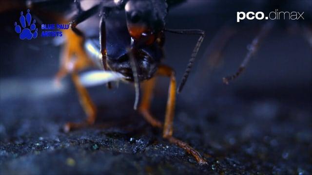 Acid Splash Defense or Bombardier Beetle