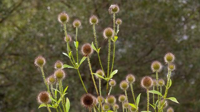 03. Naturen på Tadre, 4 min