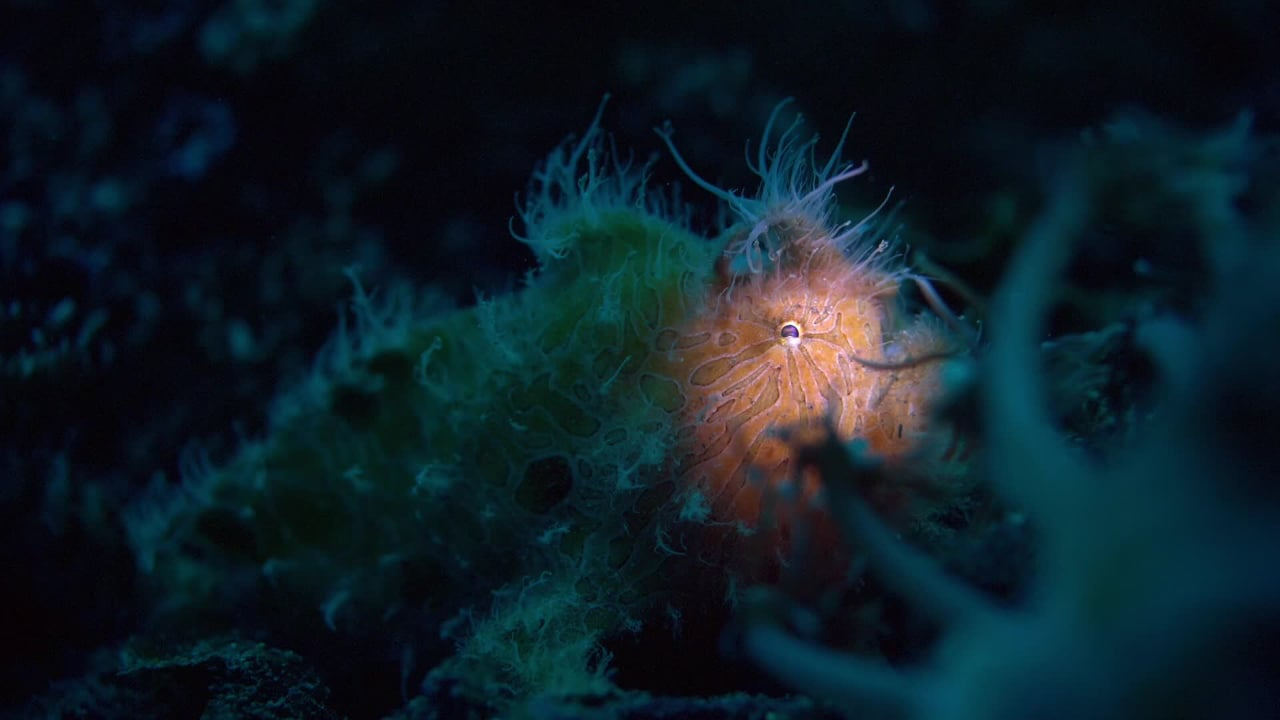 Critters of the Lembeh Strait   2017 April Highlights