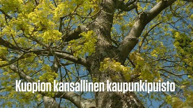 Kuopion kansallinen kaupunkipuisto