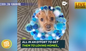 No Shame Here- Cones of FAME Help Shelter Dogs