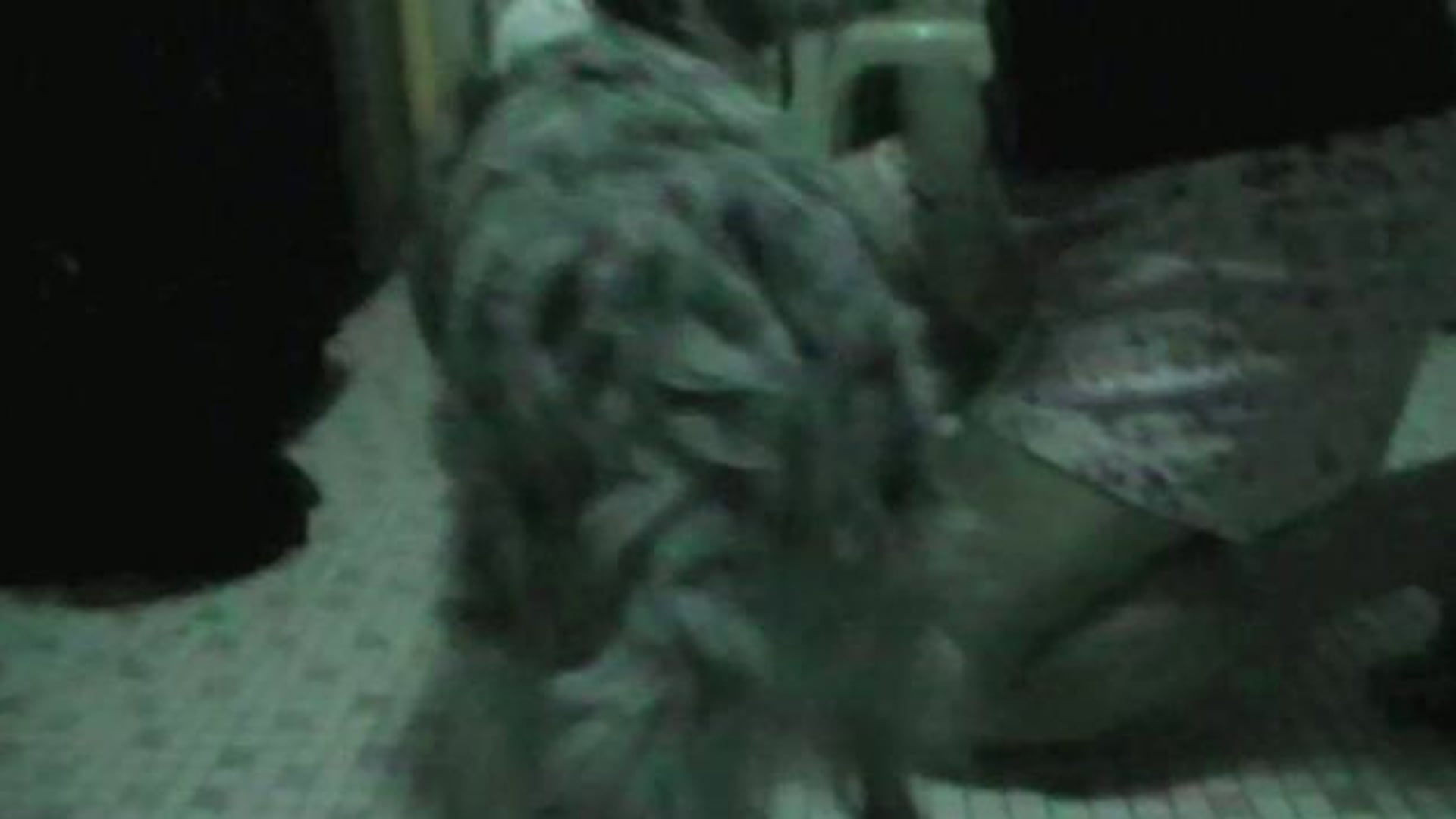 Hershey learning to pee like a boy trick!