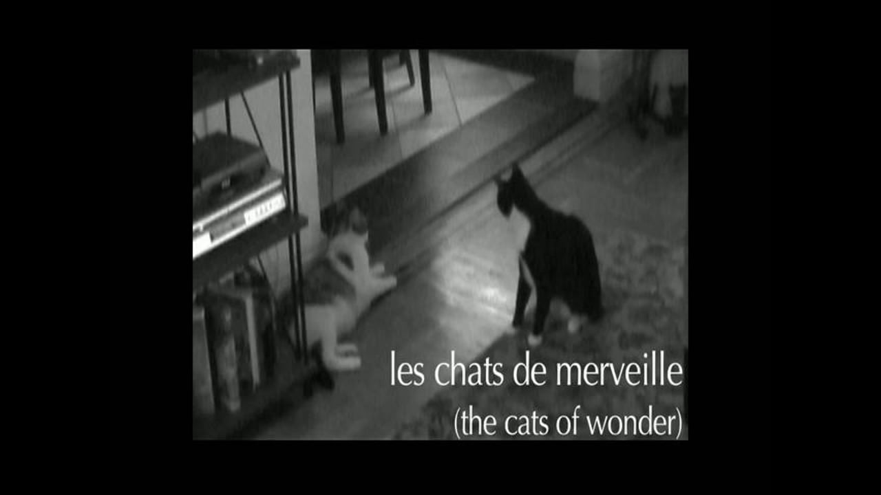 Cats of Wonder: opening