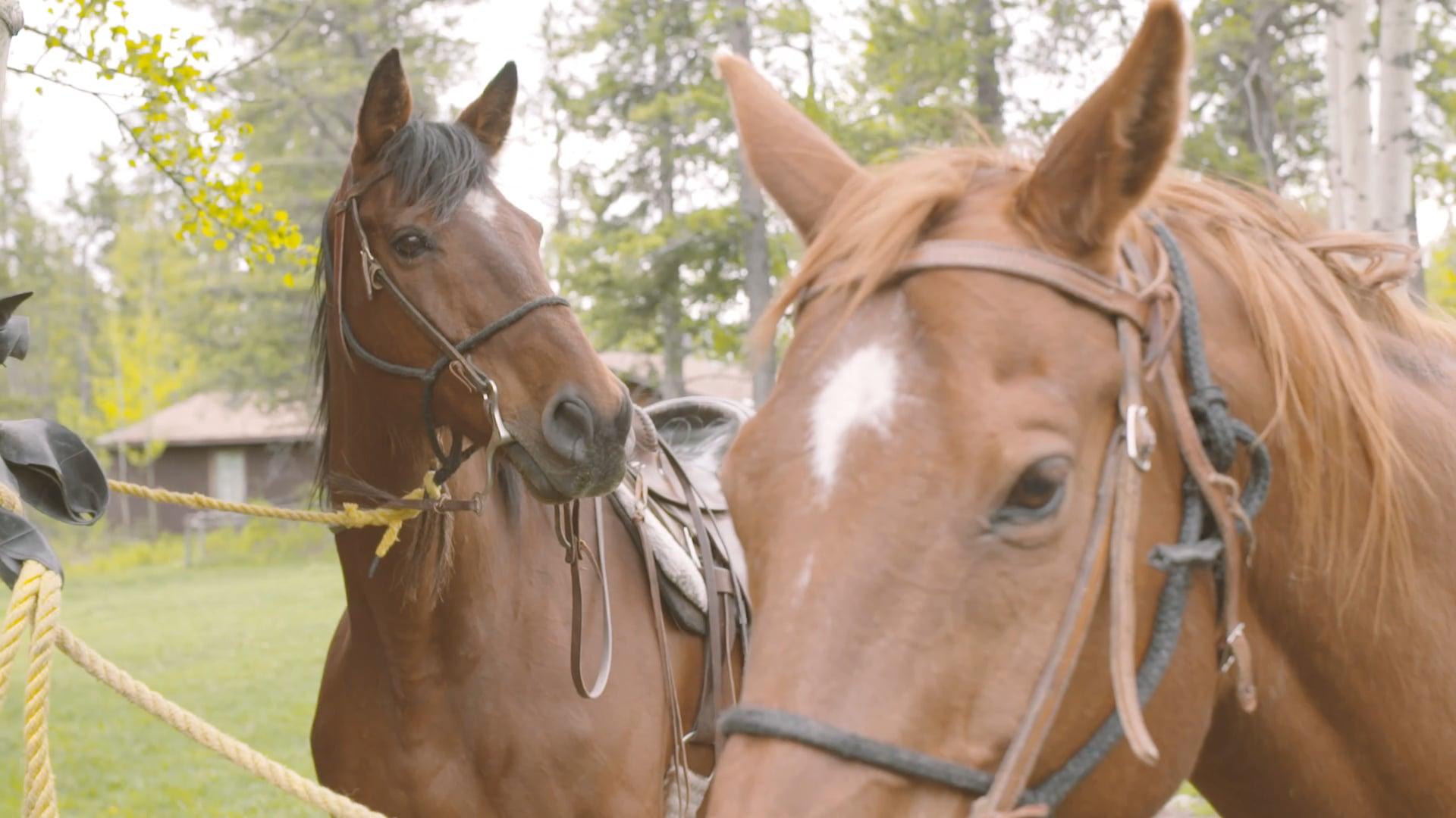 Evolve Retreat Co. - HORSE BACK RIDING