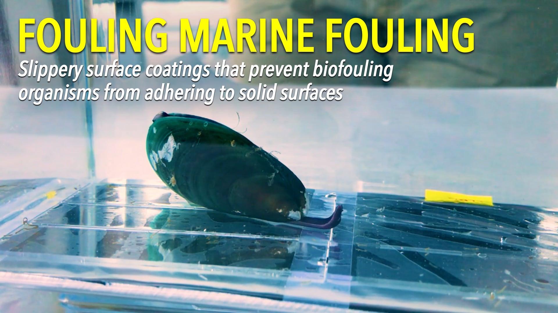 Fouling Marine Fouling