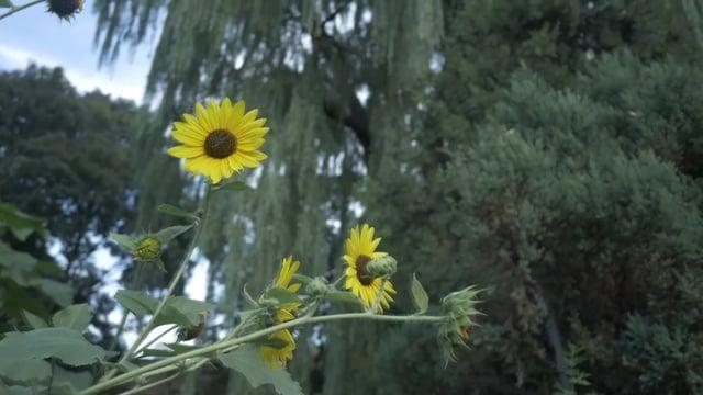 Imani Garden At Risk