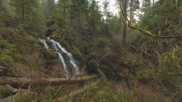 Quinault Rainforest Waterfall