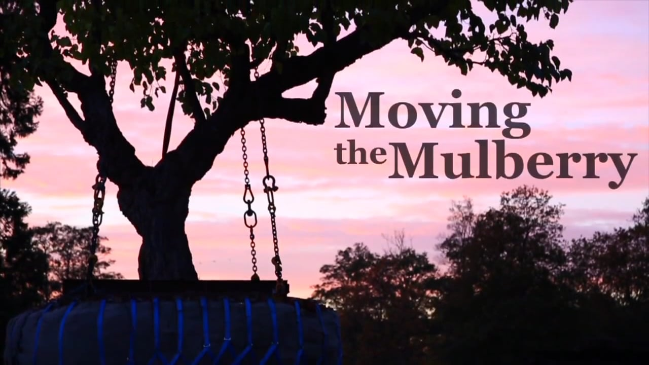 Moving the Mulberry