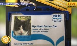 Cat Story: Scottish Cat Takes Job Patrolling Railway Station