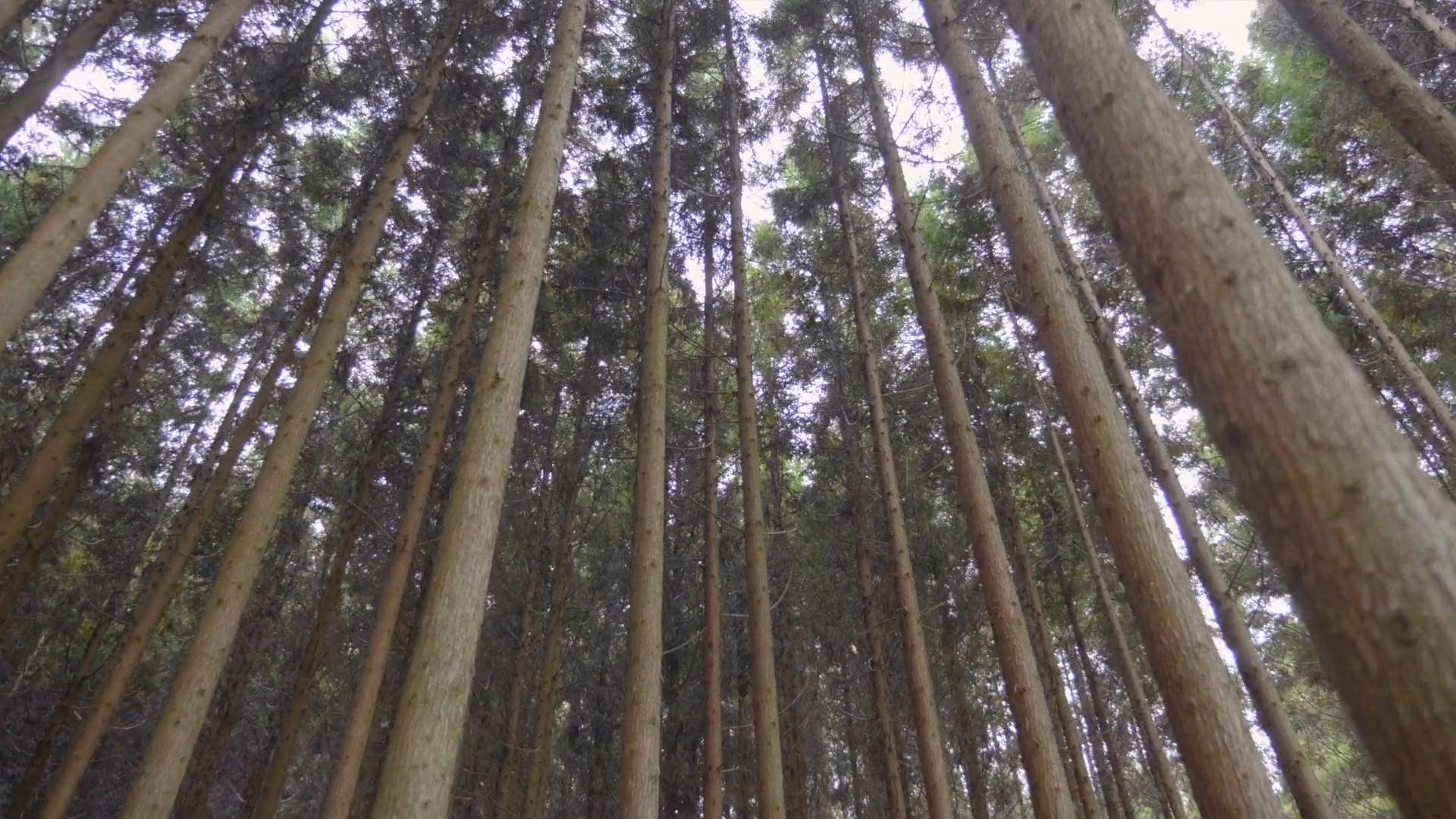 Hands of Kyoto - Teaser