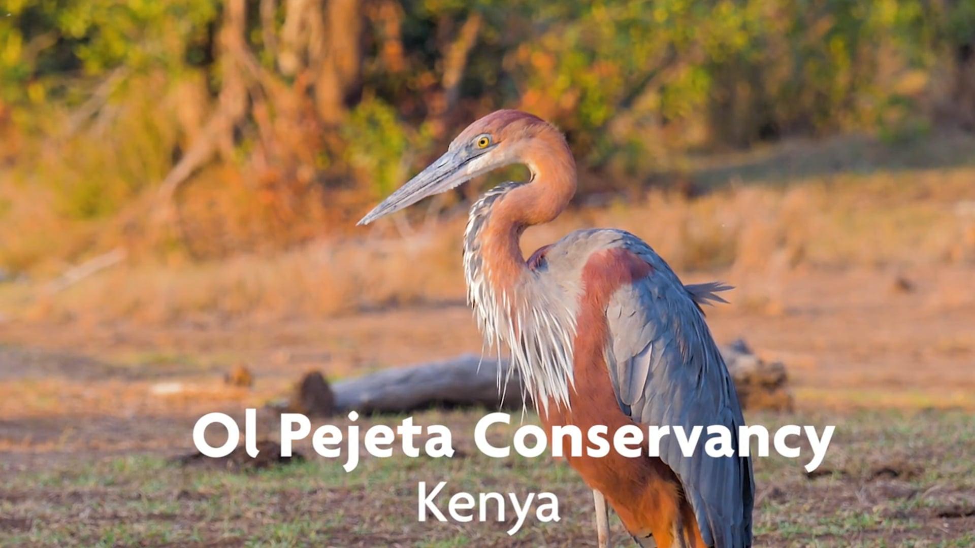 Ol Pejeta Conservancy, Kenya