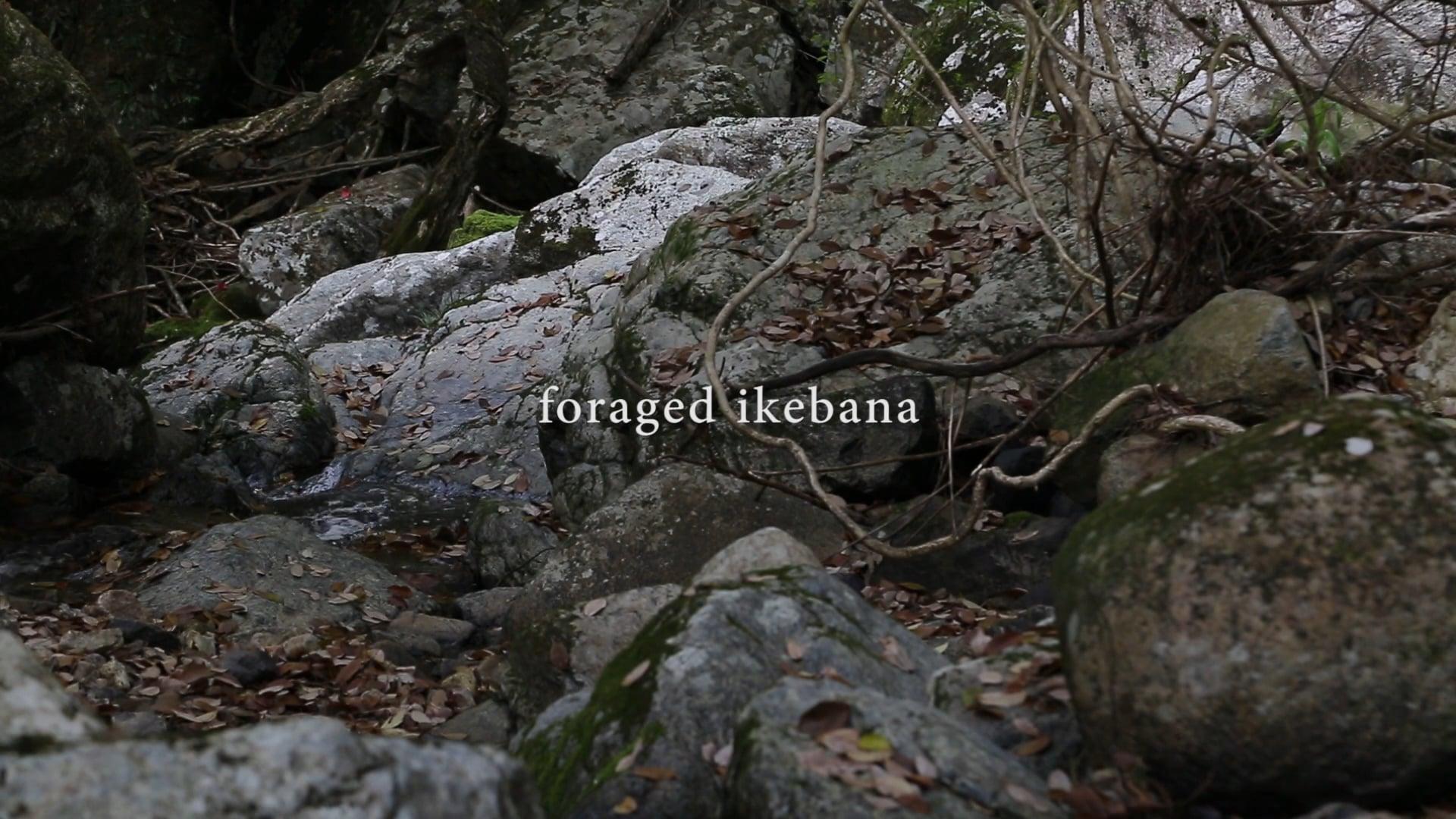 foraged ikebana 02:rurikei