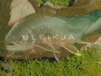 Bleikja - Fly Fishing for Arctic Char