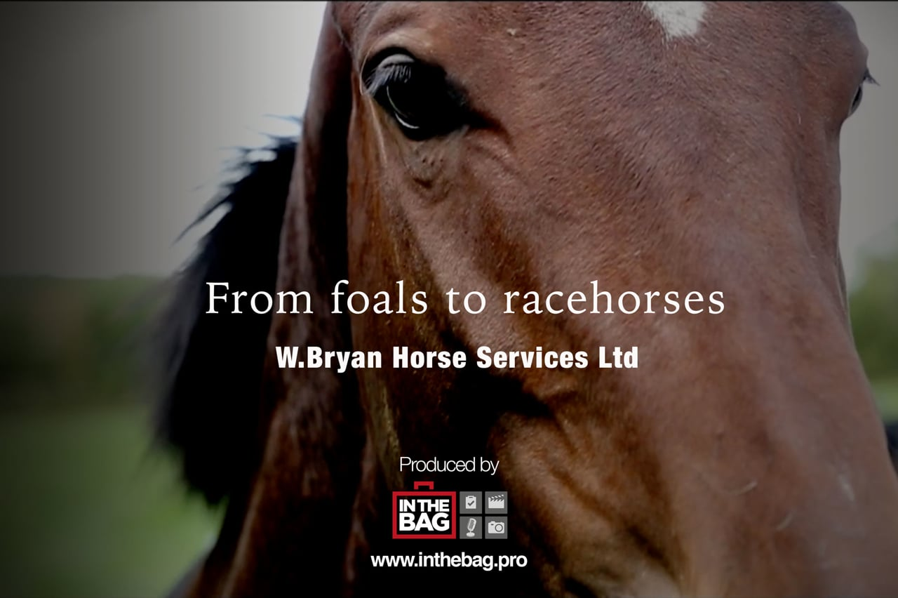 From Foals To Racehorses