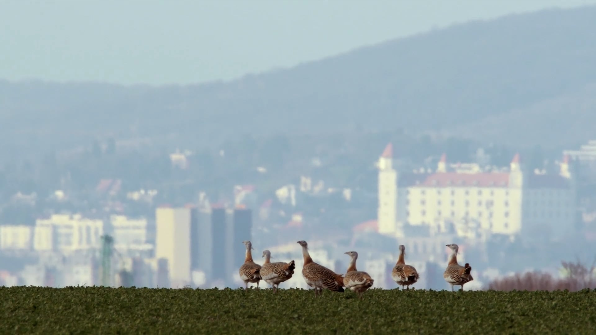 Bratislava - A City Surrounded by Nature