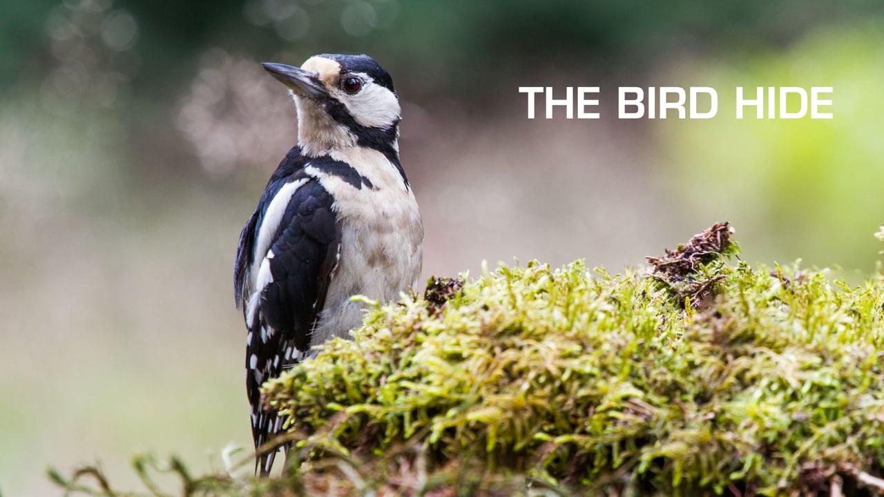 De Vogelhut - The Bird Hide
