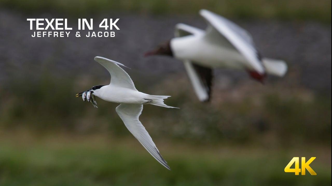 Life on Texel (4K)