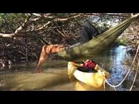 mangrove_01_HD