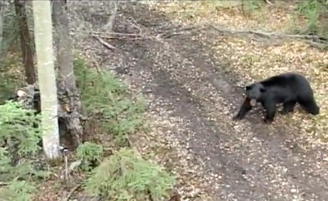 Black Bear Hunt from The Hunter's Smart Seat