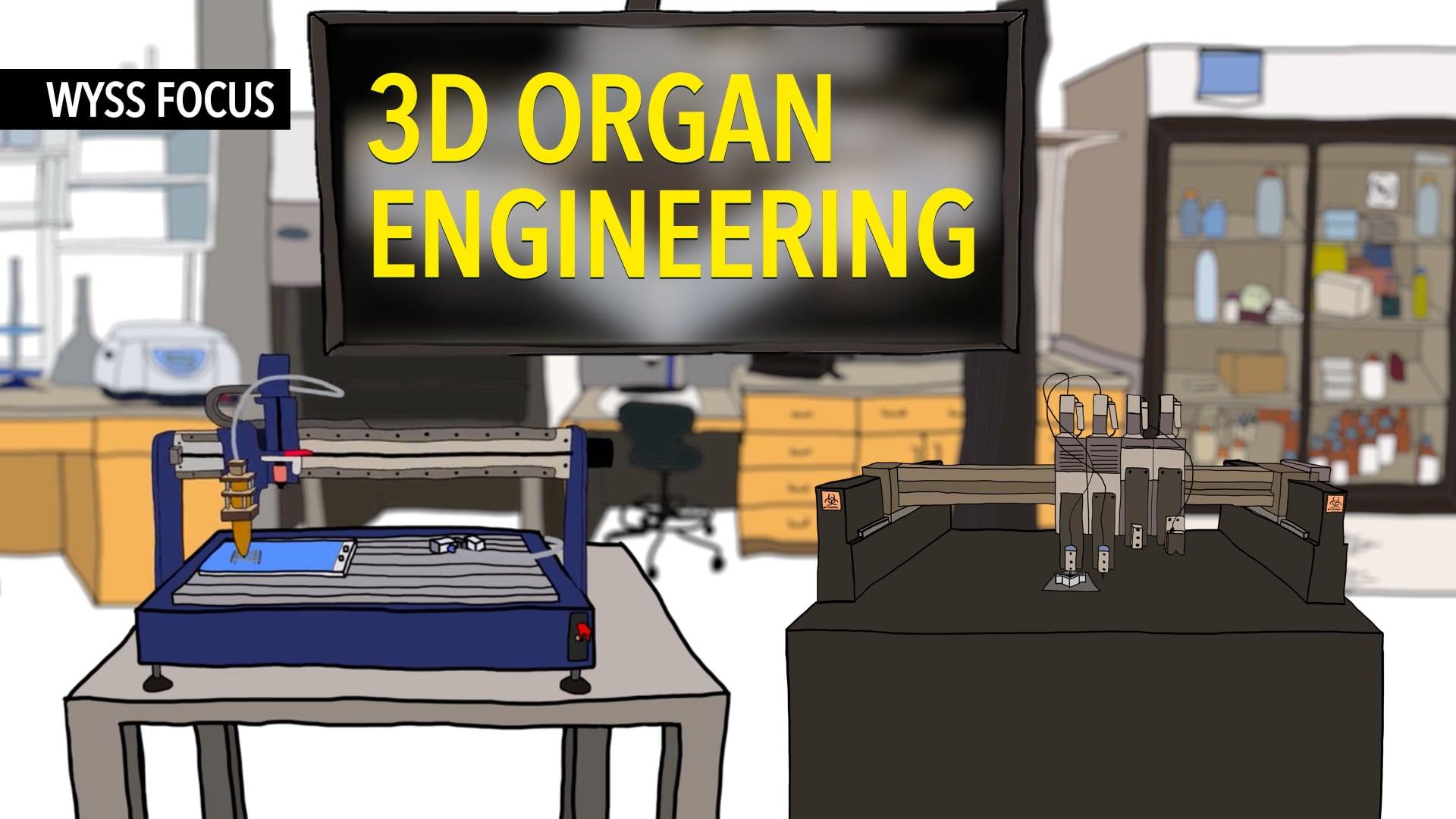Wyss Focus: 3D Organ Engineering