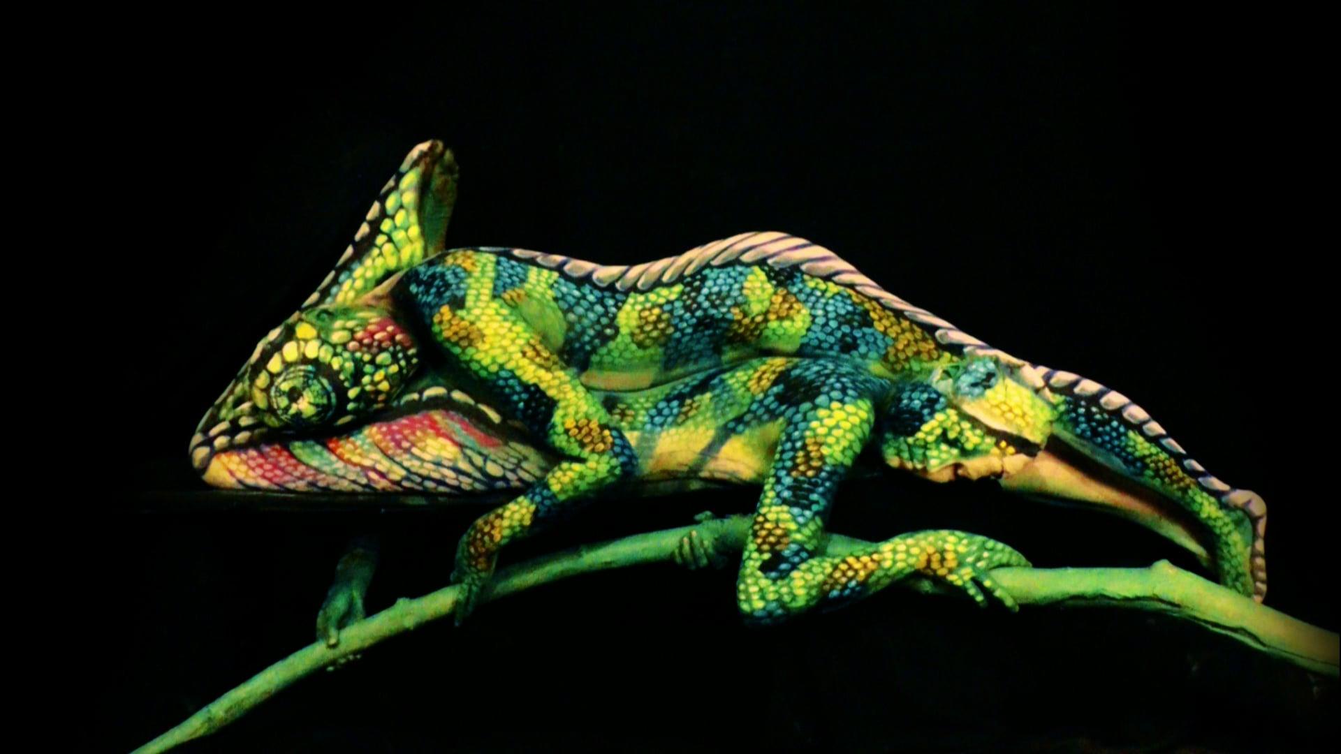 Johannes Stoetter-Chameleon