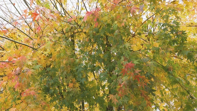Last Days of Fall - 3